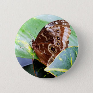 pretty eye butterfly moth brown tan picture bug 6 cm round badge