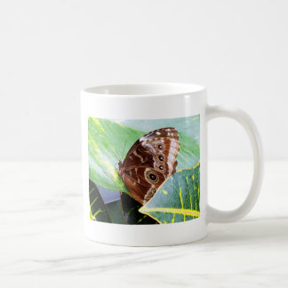 pretty eye butterfly moth brown tan picture bug coffee mug