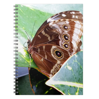 pretty eye butterfly moth brown tan picture bug notebook