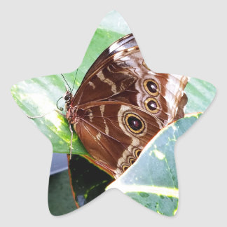 pretty eye butterfly moth brown tan picture bug star sticker