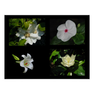 Pretty Flowers Collection White Poster