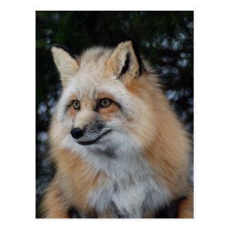 Pretty Fox Profile Postcard