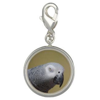 Pretty Grey Parrot