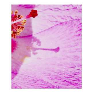 Pretty Hibiscus Flower Poster