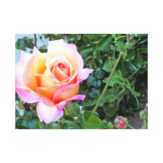 Pretty In Orange, Sunset Rose Wall Art