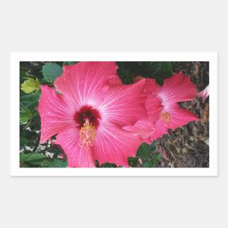 Pretty in Pink-Flower in Bloom Rectangular Sticker