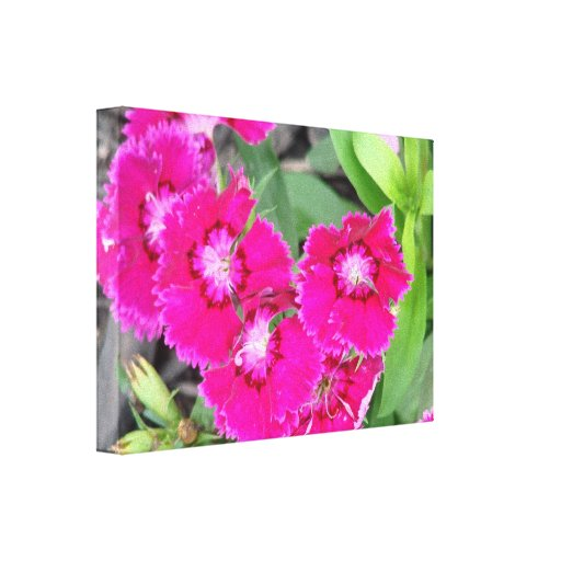 Pretty In Pink Flowers Gallery Wrapped Canvas