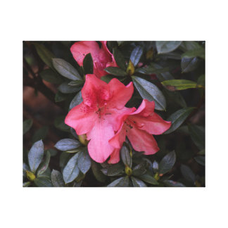 Pretty in Pink Flowers Canvas Print