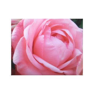 Pretty In Pink, Pink Rose Wall Art on Canvas