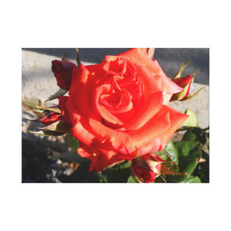 Pretty In Red, Rose Wall Art