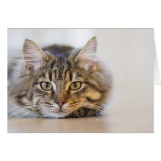 Pretty Kitty Looking at You Card