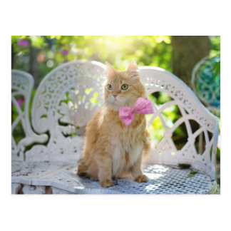 Pretty Kitty with Pink Bow Postcard