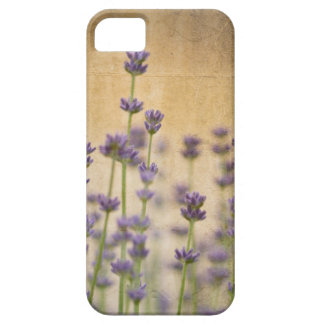 Pretty Lavender Flowers iPhone 5 Covers