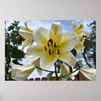 Pretty Lillies Poster