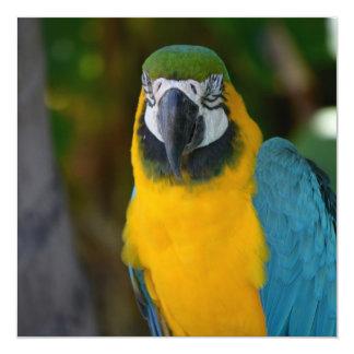 """Pretty Macaw 5.25"""" Square Invitation Card"""
