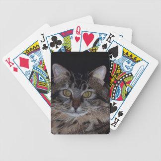 Pretty Maine Coon Cat Card Decks