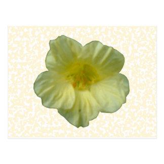 Pretty Nasturtium Flower Postcard