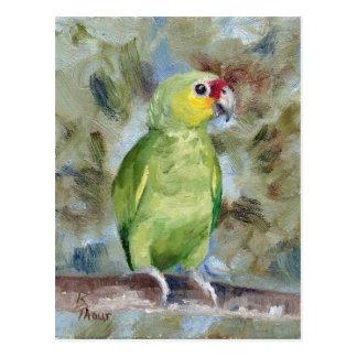 Pretty Parrot Postcard