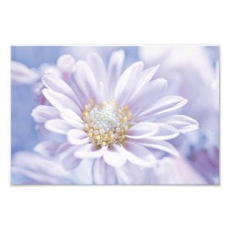 Pretty Pastel Flower Photo Art