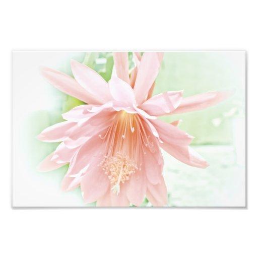 Pretty Pastel Flower Photographic Print