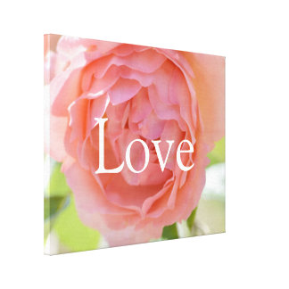 Pretty Peach Rose Love Canvas Print