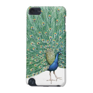 Pretty Peacock iPod Touch 5G Cases