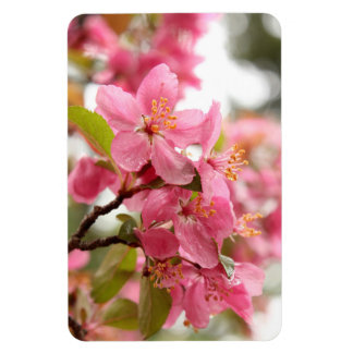 Pretty Pink Apple Blossoms Magnet