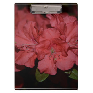 Pretty Pink Azaleas Clipboards
