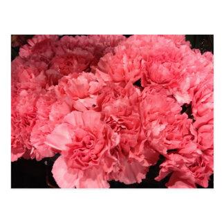 Pretty Pink Carnation Flowers Postcard