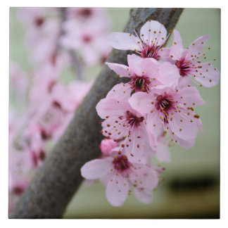 Pretty Pink Cherry Blossom Flowers Large Square Tile