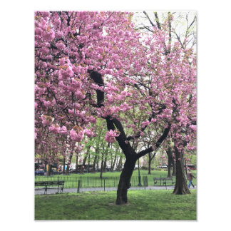 Pretty Pink Cherry Blossom Tree NYC New York City Photo Print