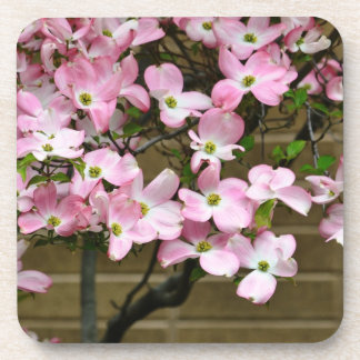 Pretty Pink Dogwood Flowers Drink Coaster