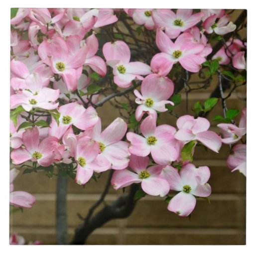 Pretty Pink Dogwood Flowers Ceramic Tile