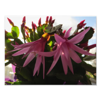 Pretty Pink Easter Cactus Flowers Photo Art