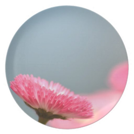 Pretty Pink English Daisy Flower Plate