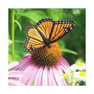 pretty pink flower and monarch butterfly stretched canvas prints