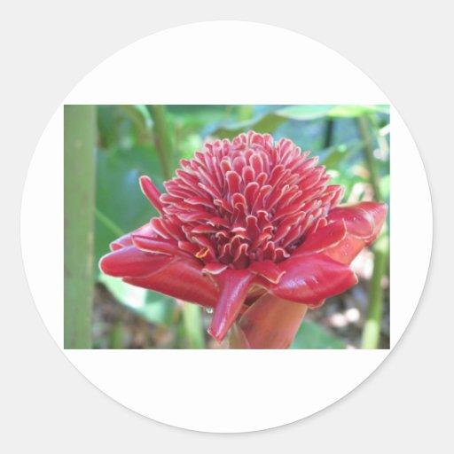Pretty Pink Flower Sticker