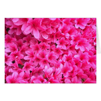 Pretty Pink Flowers Blank Card