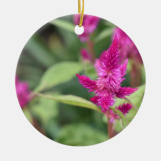 Pretty Pink Magenta Flowers Celosia Garden Photo Ceramic Ornament