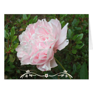 Pretty Pink Peony Flower Green Leaves Card