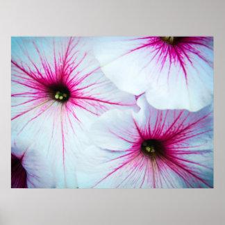 Pretty Pink Petunias Poster