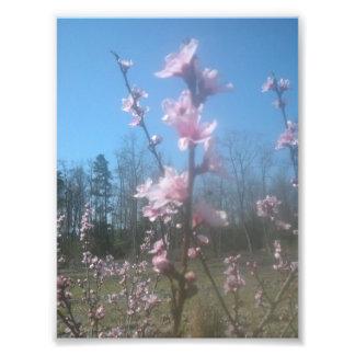 Pretty Pink Photo Print