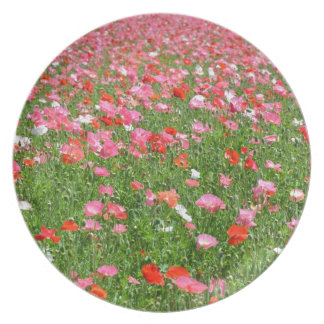 Pretty pink poppy flower print plate