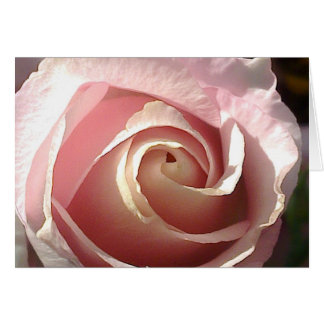 Pretty pink rose card