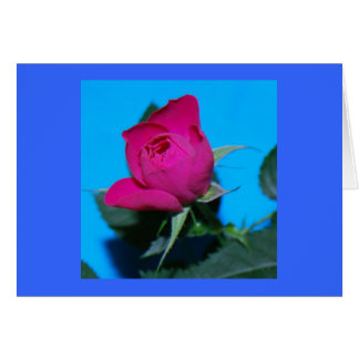 Pretty Pink Rose Greeting Card