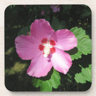 Pretty Pink Rose Of Sharon Flower Drink Coaster