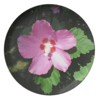 Pretty Pink Rose Of Sharon Flower Plates