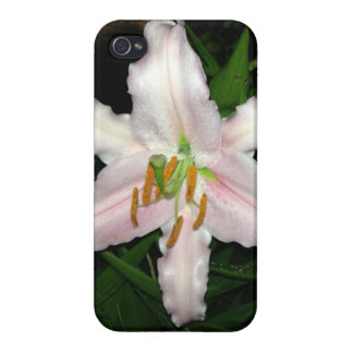 Pretty Pink Stargazer Lily At Night Cases For iPhone 4