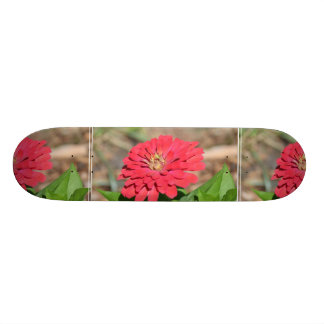 Pretty Pink Zinnia Flower Skate Boards