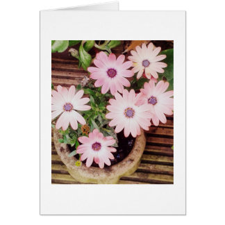Pretty pot of pink flowers, Blank Greeting Card